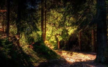luz_en_el_bosque-1024x640[1]